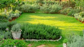 English cottage garden on green grass lawn backyard, infomal landscape decorate with rosemary herb, lavender, flower pots. Flowering plant,  greenery trees and royalty free stock photography