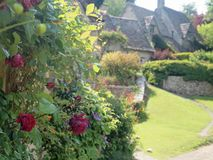 English Cottage Garden with roses. English red roses in a cottage garden in the cotswolds with views of the stone cottages behind stock photography