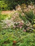 English cottage garden summer border. English country cottage garden summer border Royalty Free Stock Image