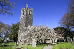 English Country Church and Spring Blossom Cornwall. Beautiful Spring Blossom in a country Churchyard in Cornwall England Stock Image