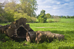English country farm estate. Country farm estate surrounded by green pasture and woodland with fallen tree trunk. Killerton estate Royalty Free Stock Images
