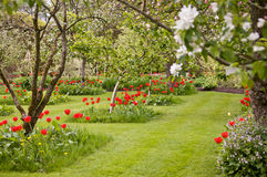 English Country Garden. With fruit trees and lawn. Taken in Spring royalty free stock image