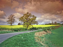 English country lane. Country Lane through farmland with yellow oil seed canola rape crop in flower graduated sky filter Royalty Free Stock Images