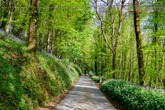 English Country Lane Royalty Free Stock Photos
