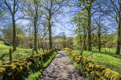 English Country lane in dappled sunlight Royalty Free Stock Photo