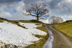 An English country lane with isolated trees and a bank of snow. stock photo