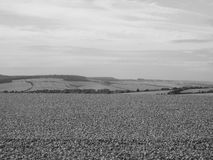 English country panorama in Salisbury in black and white Stock Image