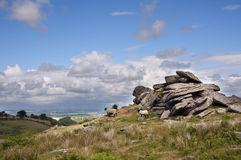 English countryside. A tor of granite rocks and sheep grazing in countryside of Dartmoor National Park, Devon, South-West England Royalty Free Stock Images