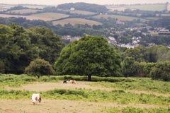 English countryside Stock Photos