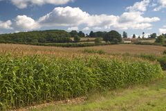English countryside. A countryside scene taken in the South West of England stock images
