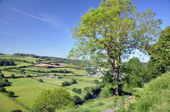 English countryside. Rolling english farmland so typical of unspoit countryside views, this image taken at Torrington in North Devon Stock Photo