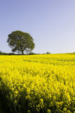 English Countryside. The English countryside in spring Royalty Free Stock Photography