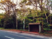 English countryside bus-stop. A deserted bus stop on a country English road framed by plants and trees in a nearby wood stock image