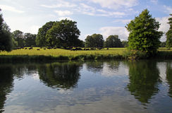 English countryside, cows and a river Royalty Free Stock Photos