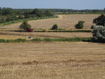 English countryside farmers field with crops Royalty Free Stock Image