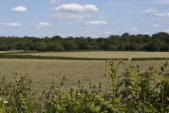 English Countryside, Holmer Green, Buckinghamshire Royalty Free Stock Photos