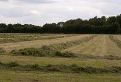 English Countryside, Holmer Green, Buckinghamshire royalty free stock image