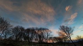 English Countryside Landscape. An evening skyline over a dark silhouette of trees Stock Photos