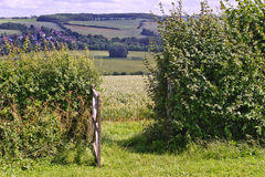 English countryside landscape through gate. View of poppies in wheat field in English countryside landscape through wooden gate and hedge Royalty Free Stock Images