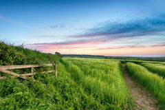 English Countryside. Lush green fields of barley growing in the English countryside Royalty Free Stock Photography