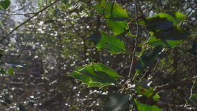 English Countryside near London. Early spring beech wood. Copy space background. Close-up of green leaves sunlit. stock video footage