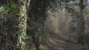 English Countryside near London. Early spring beech wood. Copy space background. Green leaves close-up. Path. stock footage