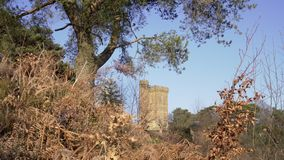 English Countryside near London. Early spring beech wood. Copy space background. Leith Hill Tower and old trees. stock video footage