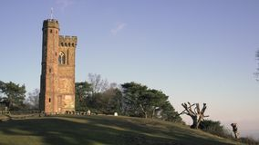 English Countryside near London. Early spring beech wood. Copy space background. Leith Hill Tower. stock footage
