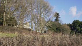 English Countryside near London. Early spring beech wood. Copy space background. Tall trees and shrubs. stock video
