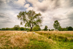 English Countryside. Showing sheep grazing in the fields Stock Photos