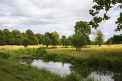 English countryside summers day with stream and lush green foliage Royalty Free Stock Photo