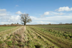 English countryside Royalty Free Stock Photography