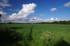 English countryside (Sussex). Photo of a Sussex field (England royalty free stock photo
