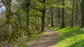 English dirt trail. A woodland path amongst a old english woodland Stock Photography