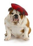 English dog Stock Photos