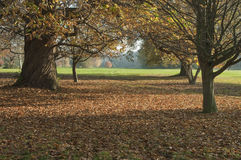 English fall Stock Photography