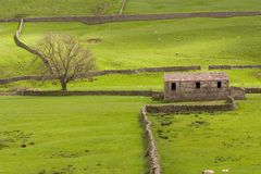 English Farm. Typical English farm in the Yorkshire Dales, England Royalty Free Stock Images