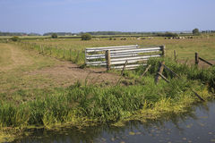 English Farm Cattle gate and Fields. English Farm Cattle Gate with Fields and Cattle Royalty Free Stock Photo