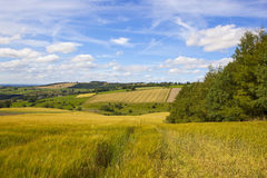 English farming landscape in summertime Royalty Free Stock Photography