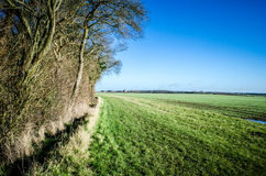 English field bordering on woodland Royalty Free Stock Images