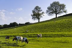 English Field In Spring Royalty Free Stock Photography