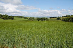 English Fields Royalty Free Stock Images