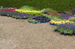 English flower bed plants. English flower beds in Garden, Norfolk, England Royalty Free Stock Image