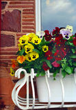 English Flower Box, Devon England UK. Planter full of pansies decorates the windows of hotel in Paignton, Devon, UK royalty free stock photos