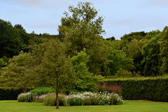 English garden Stock Image