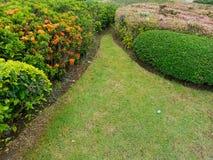 English garden Stock Images