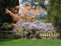 English Garden Filoli. Beautiful sculptured English garden at Filoli. Pink and purple flowering trees Stock Photography