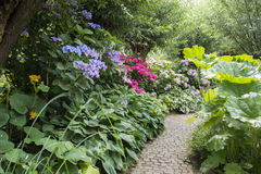 English garden with flowers Royalty Free Stock Photo