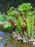 English Garden - Gunnera. Wooden gardeb bench on background Royalty Free Stock Photos