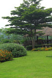 English garden. Stock Photo